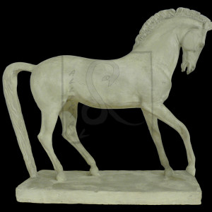 cavallomorbiducci