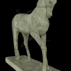 cavallomorbiducci001