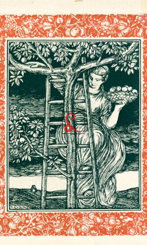 Ercole Dogliani, verso stampa di figura femminile recante un cesto di frutta in atto di scendere da una scala appoggiata a un albero